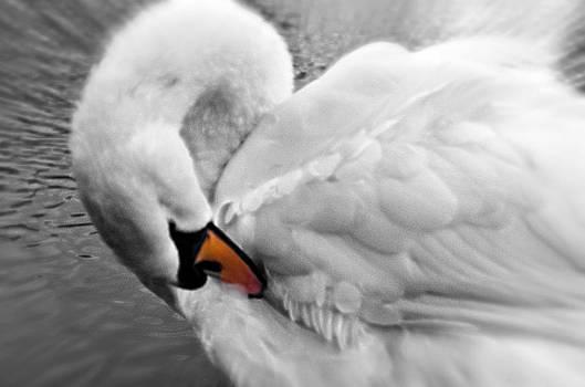 Swan Elegant by Cheryl Cencich