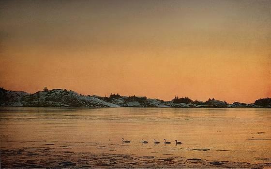 Swan Family by Sonya Kanelstrand