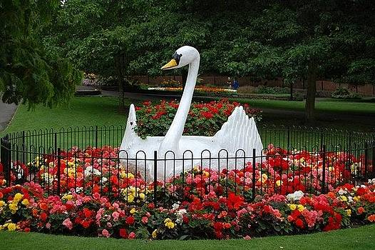 Swan flower bed by Geoff Cooper