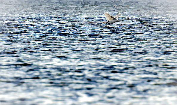 Swan by Henrik Petersen