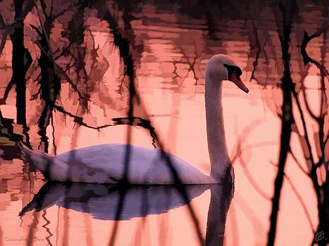 Swan in a Pink Evening by Christopher Grove