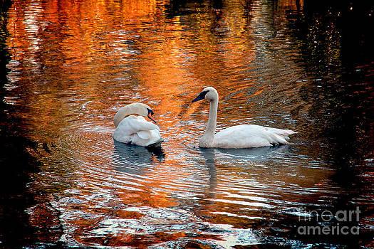 Jeff McJunkin - Swan Lake II