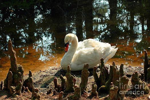 Jeff McJunkin - Swan Lake III