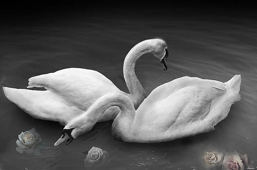 Larry Butterworth - SWAN LAKE