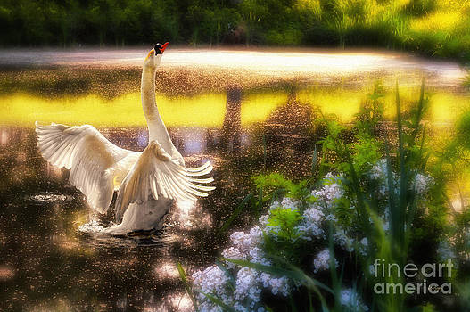 Lois Bryan - Swan Lake