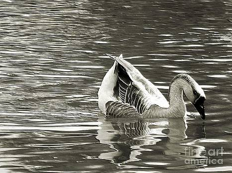 Robyn King - Swan Lake Monochrome Digital Art