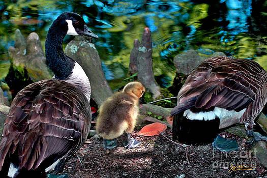 Jeff McJunkin - Swan Lake New Arrival