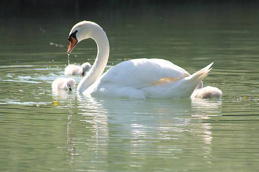 Swan lake by Rogerio Mariani