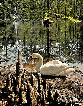 Jeff McJunkin - Swan Lake Watercolor