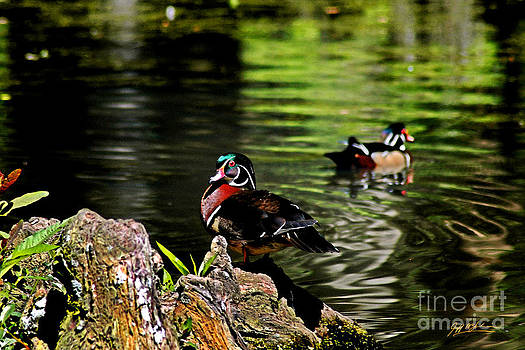 Jeff McJunkin - Swan Lake Woody II