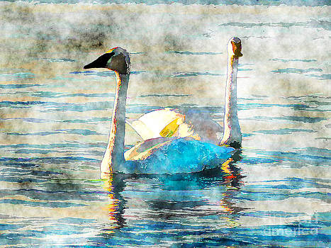 Swan Light by Claire Bull