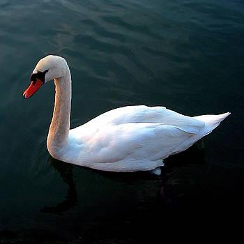Marc Philippe Joly - swan