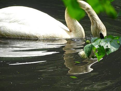 Swan by Nelin Reisman