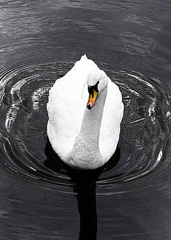 Swan by Nick Field