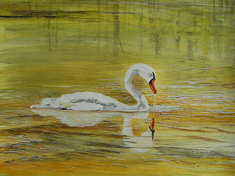 Swan on Golden Waters by Connie Rowsell