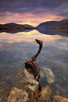 Swan by Pawel Klarecki