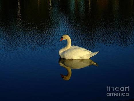 Bob Sample - Swan Reflection