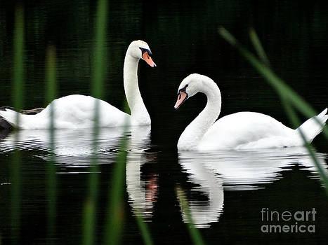 Scott B Bennett - Swan river