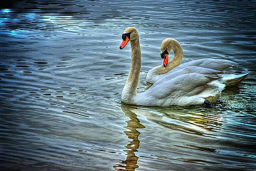 Swan song by Dennis Baswell