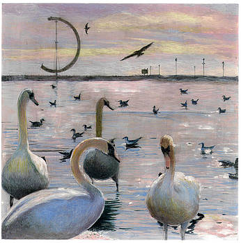 Swans - 2 by Perry Chow