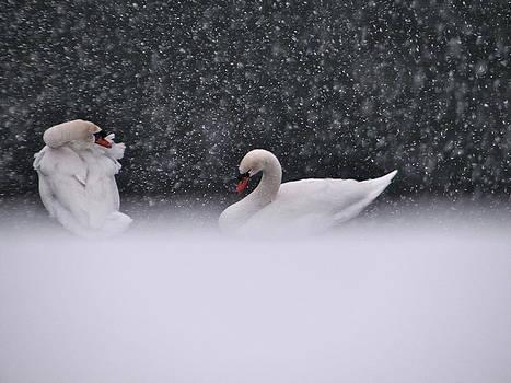 Sandy Tolman - Swans in Falling Snow - 5839-4