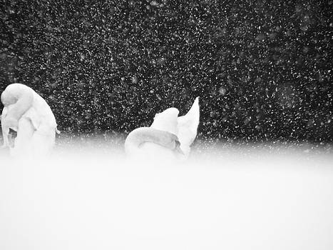 Sandy Tolman - Swans in Falling Snow - 5841-5 BW