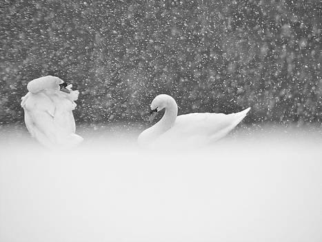 Sandy Tolman - Swans in Falling Snow - 8539-8 BW 2