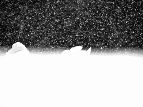 Sandy Tolman - Swans in Falling Snow - 8548-5 BW