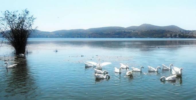 Swans by Ioanna Papanikolaou