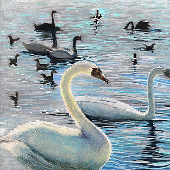 Swans by Perry Chow