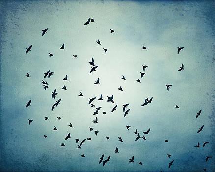 Carolyn Cochrane - Swarm