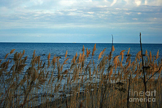 Swaying Grasses by Kathy DesJardins