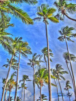 William Reek - Swaying Palms