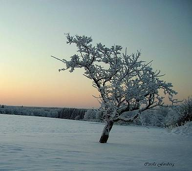 Swedish Winter by Carola Ann-Margret Forsberg