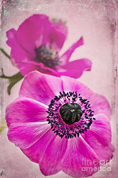 Angela Doelling AD DESIGN Photo and PhotoArt - Sweet Anemone