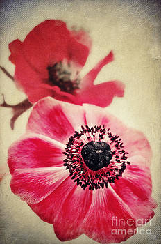 Angela Doelling AD DESIGN Photo and PhotoArt - Sweet Anemone II