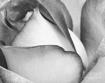 Sabrina L Ryan - Sweet Black and White Rose