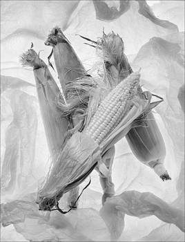 Sweet Corn by Morocco Flowers Images