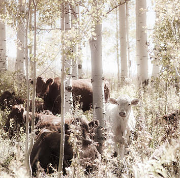 Sweet Cows by Beth Riser