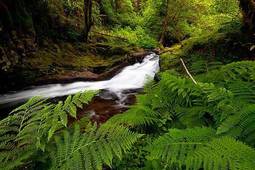 Sweet Creek Ferns by Andrew Kumler