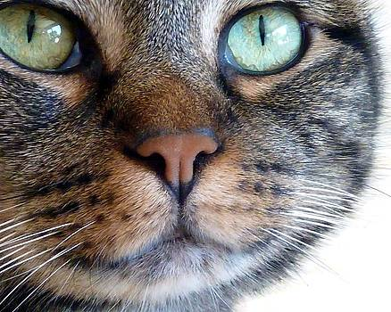 Patricia Strand - Sweet Green Eyes