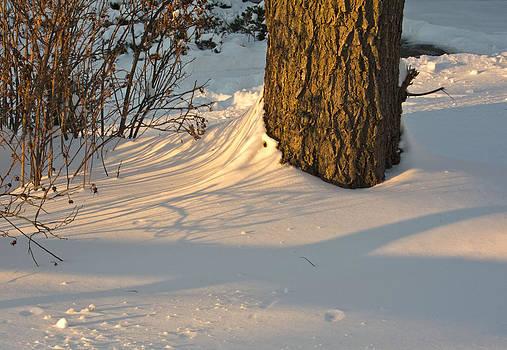 Sweet Light on the Snow by Nancy De Flon
