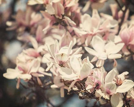 Lisa Russo - Sweet Magnolia
