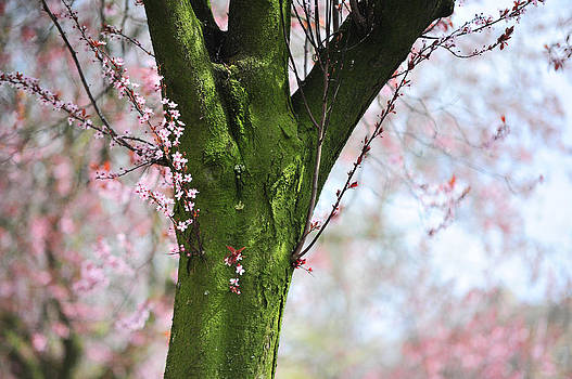 Jenny Rainbow - Sweet Moments of Spring. Pink Spring in Amsterdam