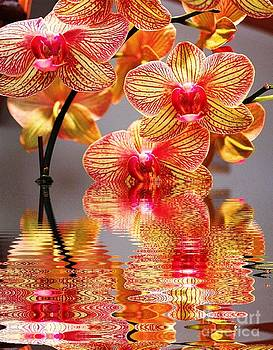 Sweet Orchid Reflection by Judy Palkimas
