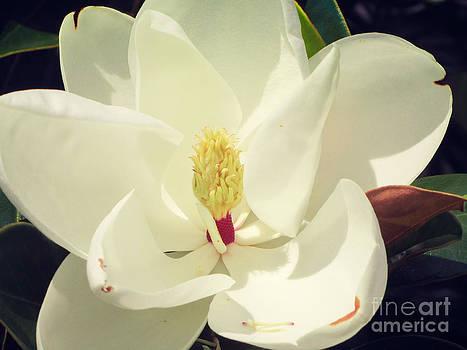 Jaclyn Hughes Fine Art - Sweet Southern Belle