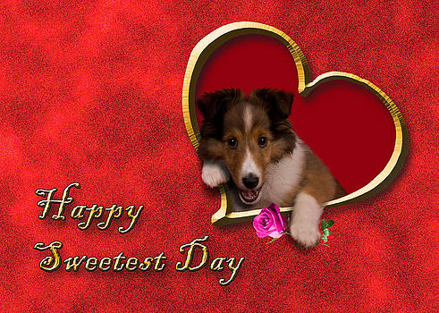 Jeanette K - Sweetest Day Sheltie