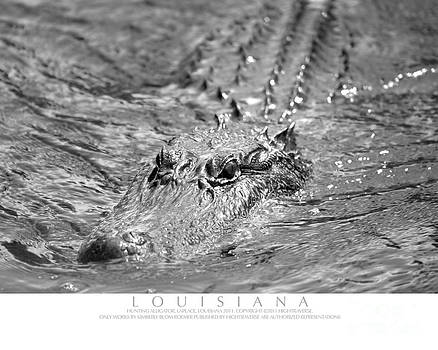 Swimming Alligator by Kimberly Blom-Roemer