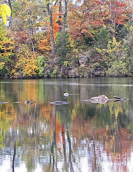 Minding My  Visions by Adri and Ray - Swimming Duck Amongst the Colorful Fall Foliage Reflections