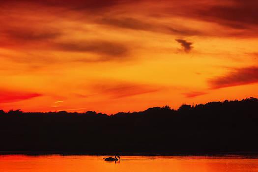 Sylvia J Zarco - Swimming in Sunset Skies
